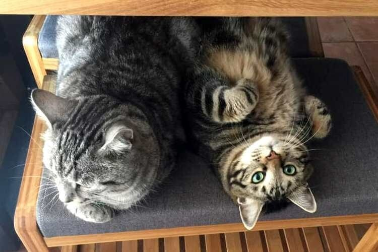 Звонили коты