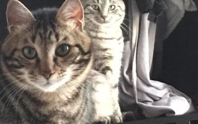 Звонили коты. Обнимашки